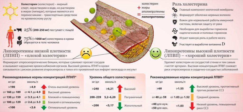 таблица норм холестерина в крови у женщин
