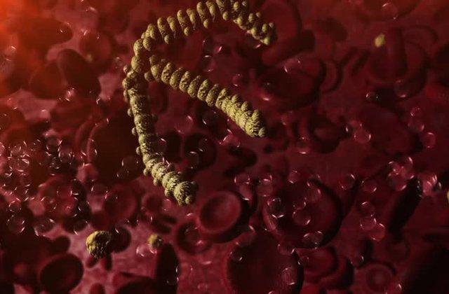 триглицериды - что это такое?