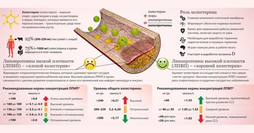 нормы холестерина у женщин по возрасту таблица